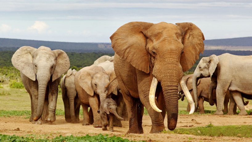 1576603918 The 25 largest animals in the world photos and videos