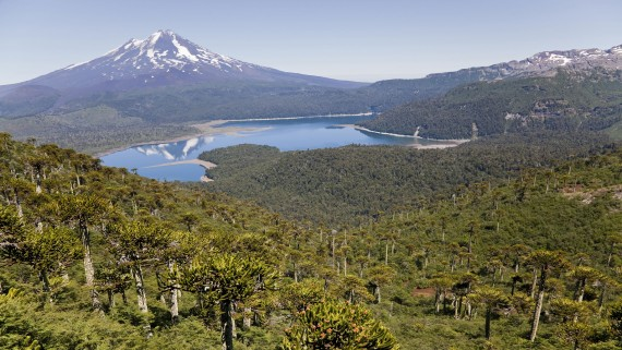 Views from the Conguillío National Park of Llaima Volcano, Chile