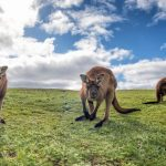 Tips documentation and requirements to travel to Australia