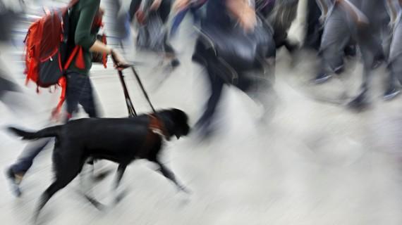 Transport d'animaux à Ryanair