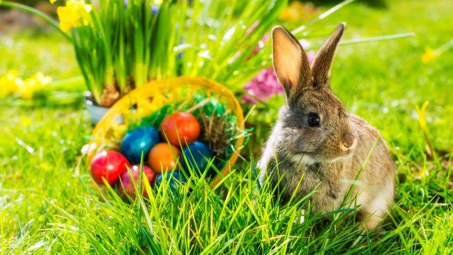 Rabbit and Easter eggs: a German custom