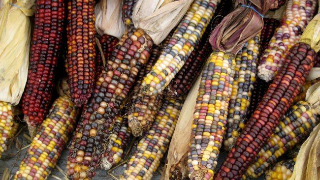 Modalities of corn in Central America
