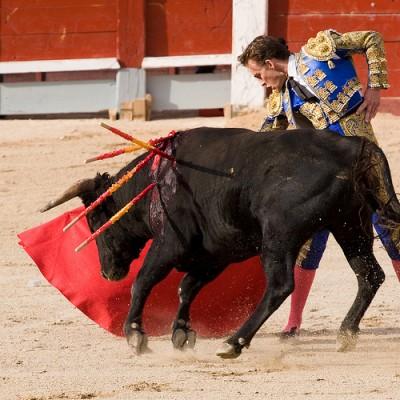 Bulls in Almería