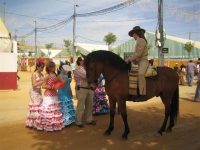 Horses at the Cordoba Fair