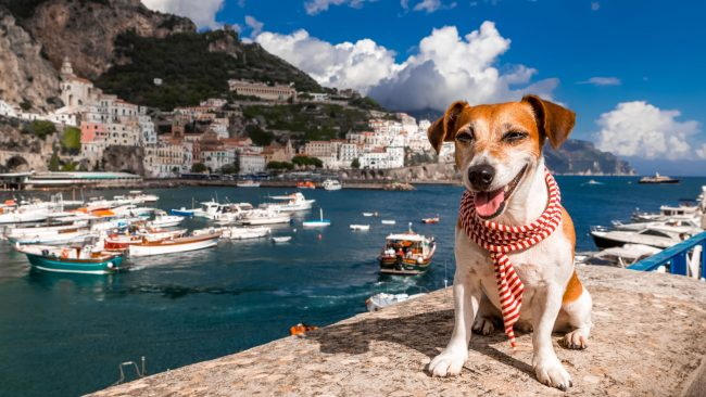 Travel with dog to Italy