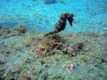 Centres de plongée de Malaga