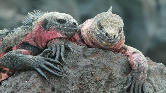 Visit Ecuador: the Galapagos Islands