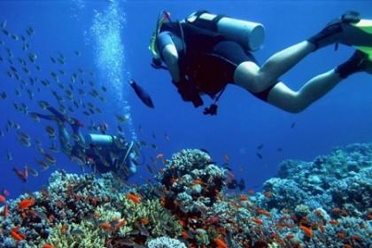 Diving in Malaga