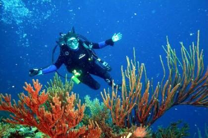 Dive in Costa Rica
