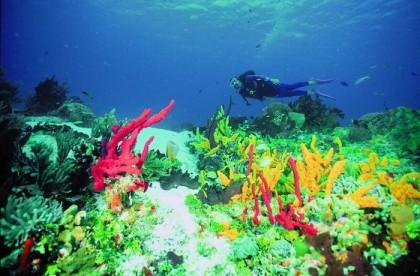 Diving Denia