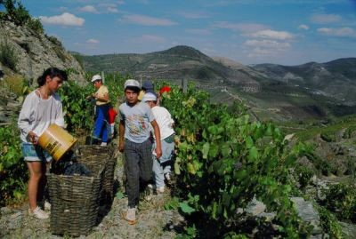 Rural tourism in Portugal working