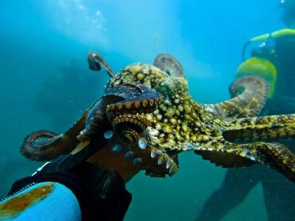 Plonger à Gran Canaria
