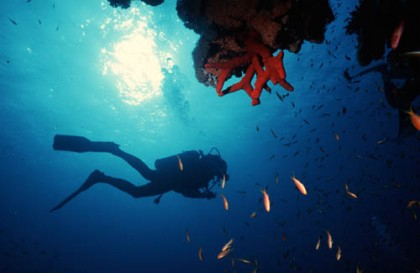 Plongez dans la mer Rouge