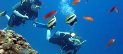 Diving in Cabo de Gata