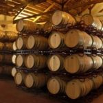Visit Fontanars Winery
