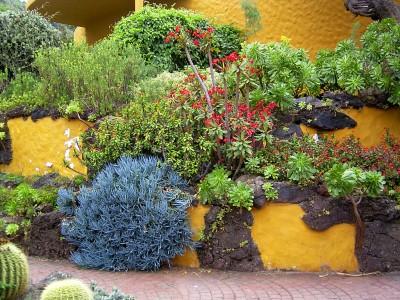 Canary garden