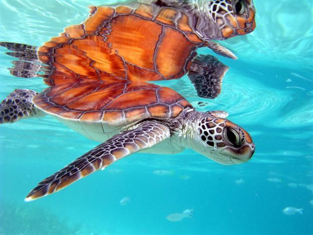 Animals of the beaches of Tahiti