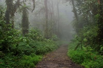 Road in Monteverde