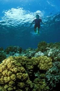 Diving in Tenerife exlporando