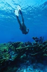 Diving in Tenerife diving