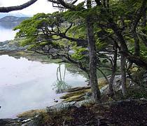 Images Tierra del Fuego National Park