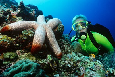 diving in Alicante at the bottom of the sea