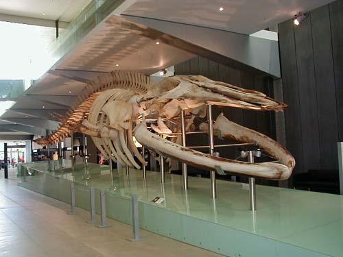 Melborune Museum-Australia