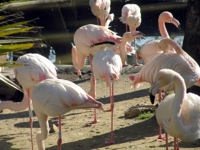 Sherry Flamingos Zoo