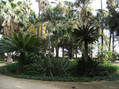 Climate Malaga