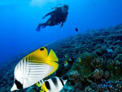 Diving in Polynesia