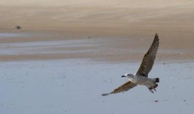 Doñana National Park Huelva
