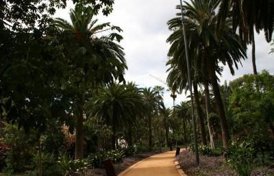 Garcia Sanabria Park Tenerife