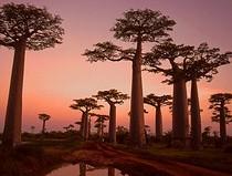 Madagascar a travel destination