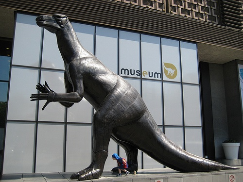 Museum of Natural Sciences- Brussels