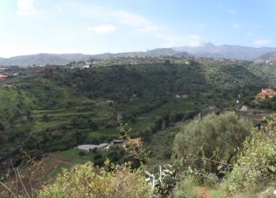 Pino Santo Gran Canaria