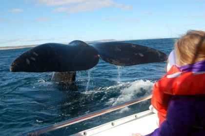 The best places in the world for whale watching